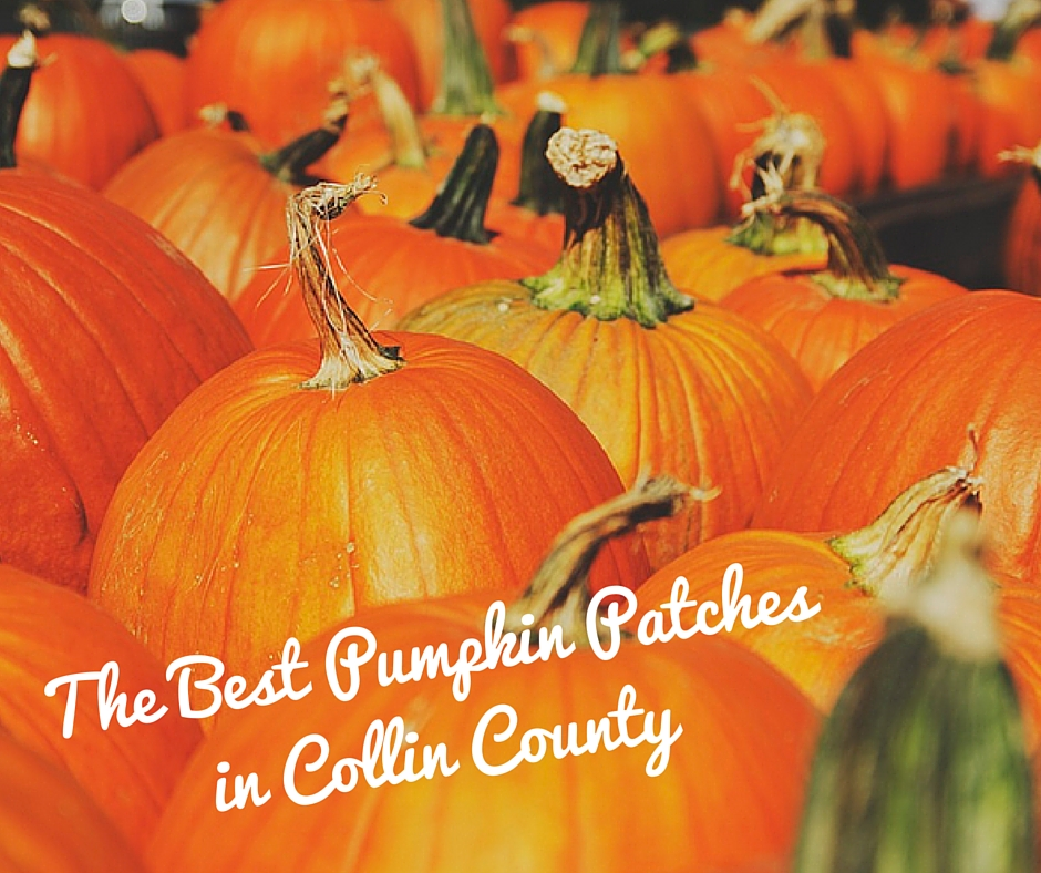 The Best Pumpkin Patches in Collin County