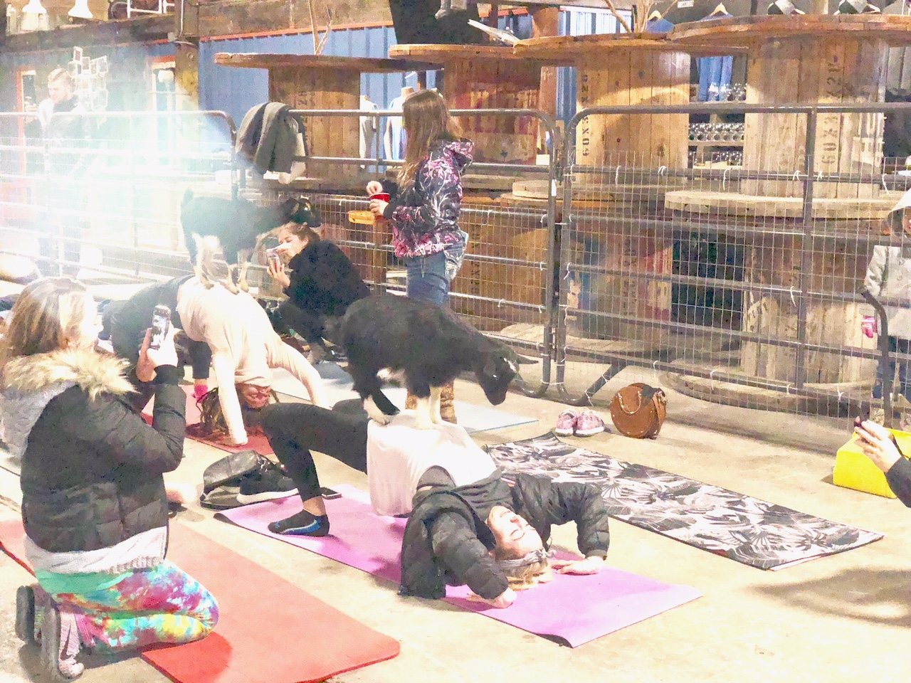 goat yoga dallas