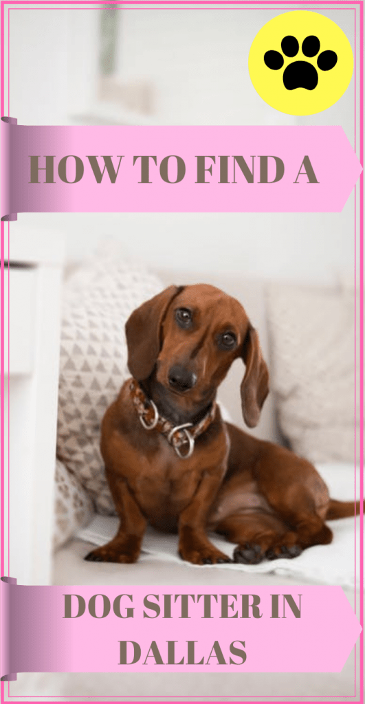 How to Find a Dog Sitter in Dallas