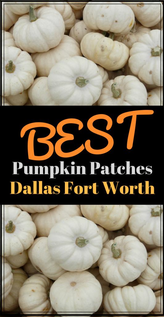 Best Pumpkin Patches in Dallas Fort Worth