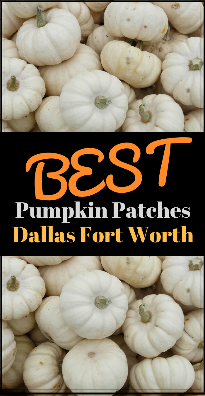 Best Pumpkin Patches Dallas Fort Worth