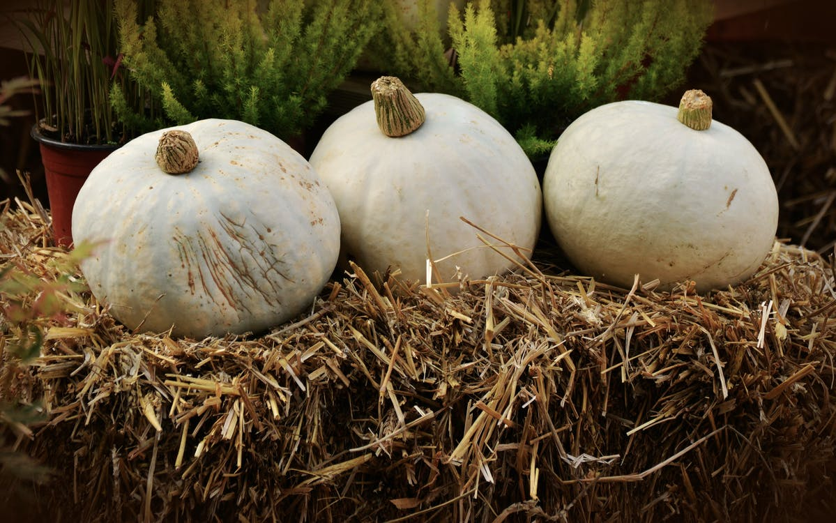 best pumpkin patches Dallas
