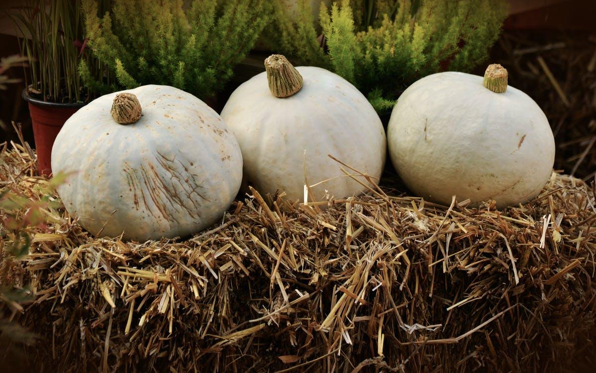 best pumpkin patches Dallas