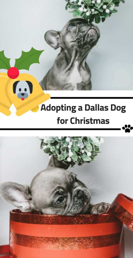 Adopting a Dallas Dog for Christmas