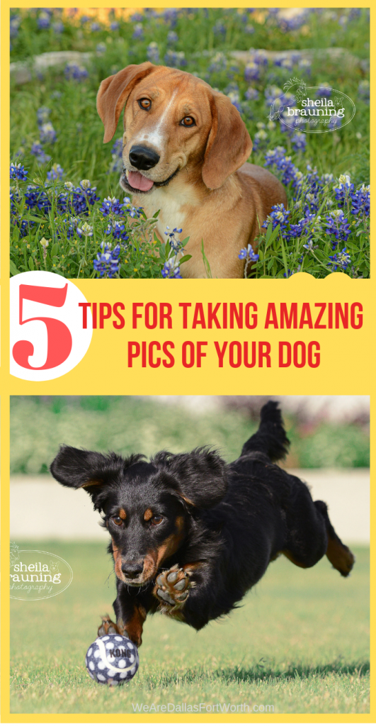 5 Tips for Taking an Amazing Pic of your Dog  – Best Dallas Dog Photography 2019