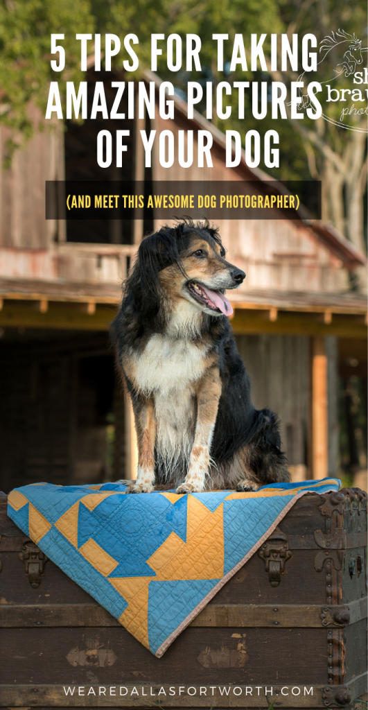 Dallas Dog Photographer