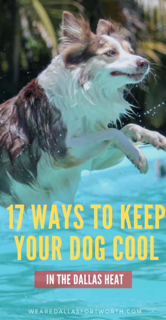 17 Ways to Keep your Dog Cool in the Dallas Heat