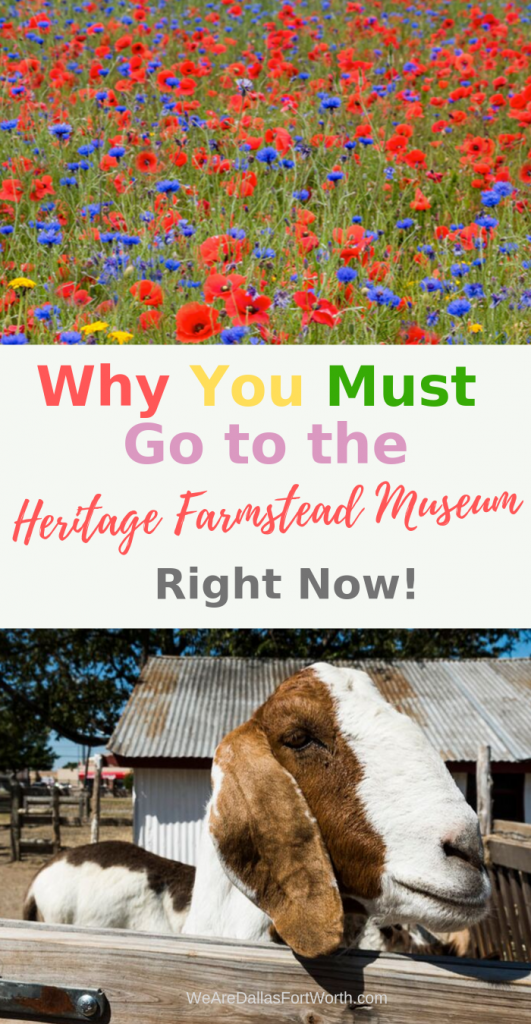Why you must go to the Heritage Farmstead Museum in Plano right now
