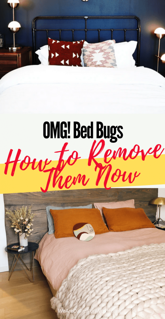 This is Exactly How You Solve Bed Bug Removal in Dallas in 2019