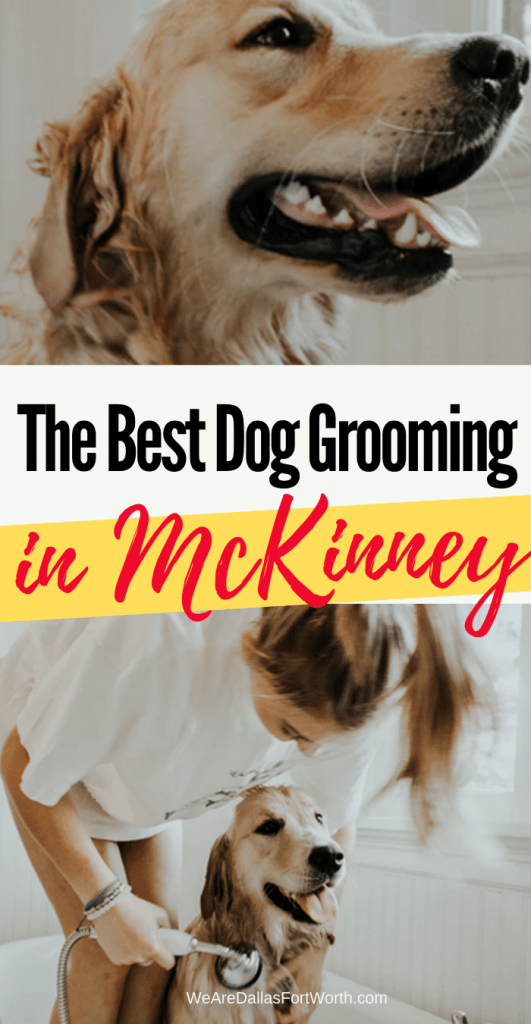 How to Find the Best Dog Grooming in McKinney