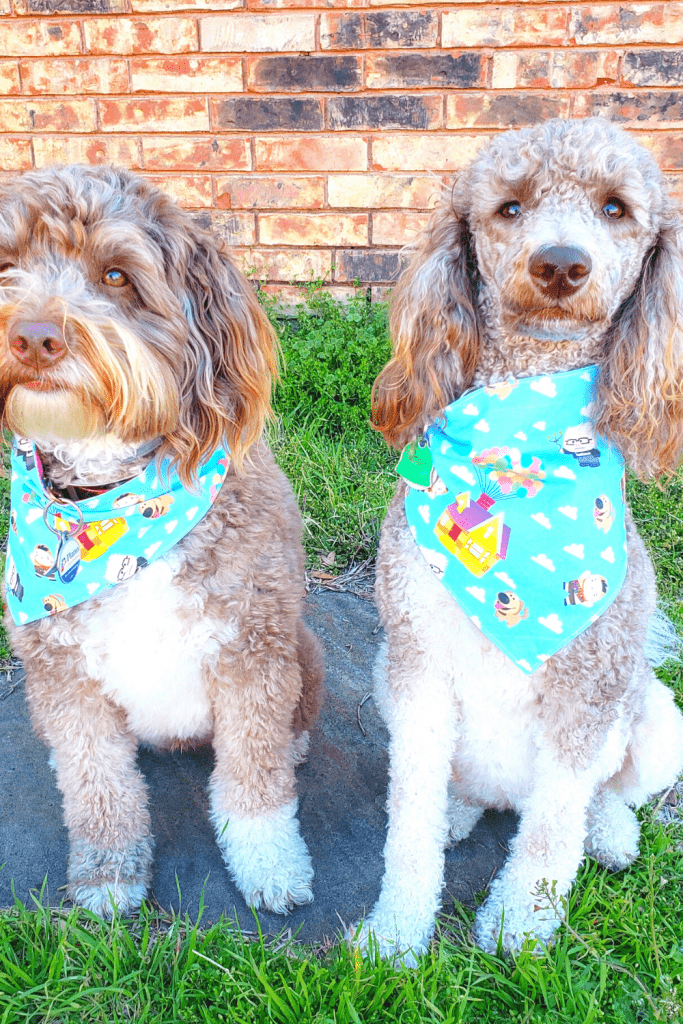 Geekster Pets: Geeky Bandanas For Your Pet