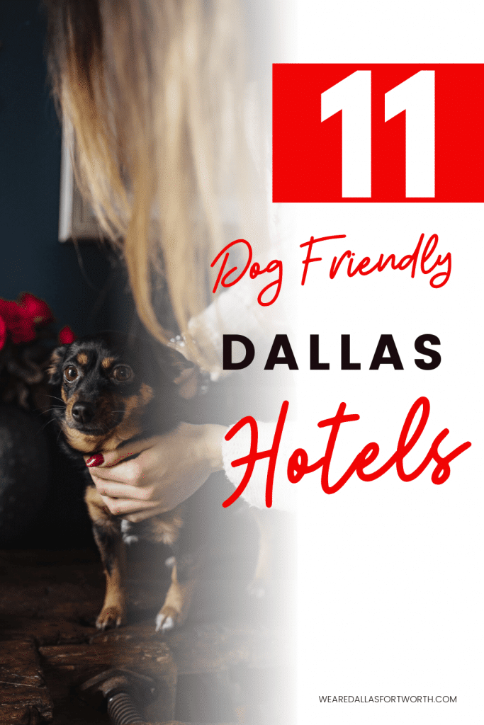 11 Dog-Friendly Dallas Hotels That Won't Disappoint