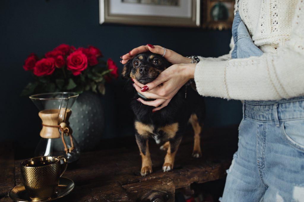 Dog-Friendly Dallas Hotels
